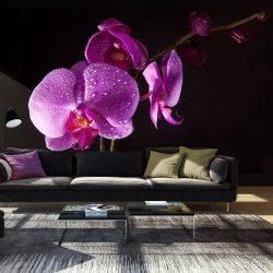 Fotótapéta - Stylish Orchis ll