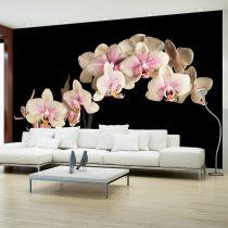 Fotótapéta - Virágzó orchidea ll