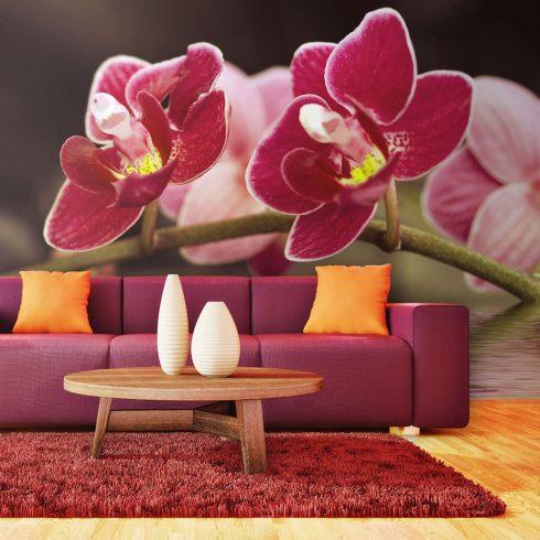 Fotótapéta - Gyönyörű orchidea virágok a víz  -  ajandekpont.hu