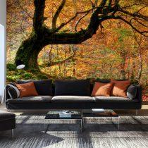 Fotótapéta - Autumn, forest and leaves