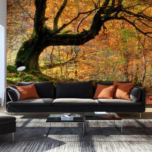 Fotótapéta - Autumn, forest and leaves  -  ajandekpont.hu