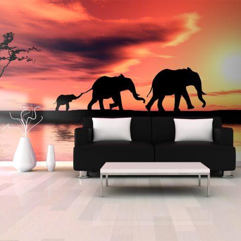 XXL Fotótapéta - elephants: family    550x270 cm  -  ajandekpont.hu