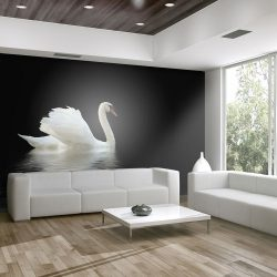 Fotótapéta - swan (black and white)