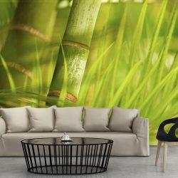 Fotótapéta - bamboo - nature zen