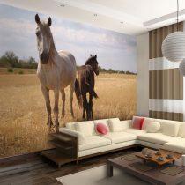 Fotótapéta - Horse and foal  -  ajandekpont.hu