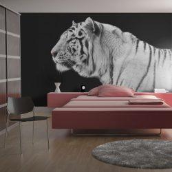 Fotótapéta - Fehér tigris