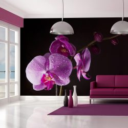 Fotótapéta - stylish  orchis l