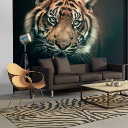 Fotótapéta - Bengal Tiger