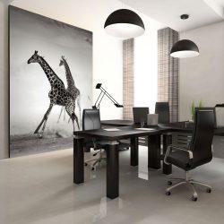 Fotótapéta - Zsiráfok