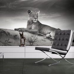 Fotótapéta - Fekete-fehér nőstény oroszlán