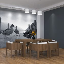 Fotótapéta - Ducks