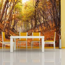 Fotótapéta - Őszi erdő