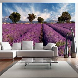 Fotótapéta - Lavender field in Provence, France