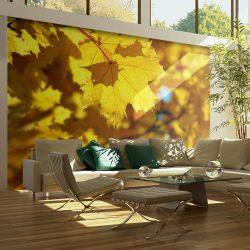 Fotótapéta - Sunlight on leaves of the maple  -  ajandekpont.hu