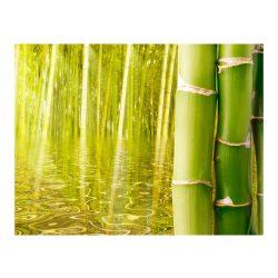 Fotótapéta - Egzotikus hangulatú bambusz ll