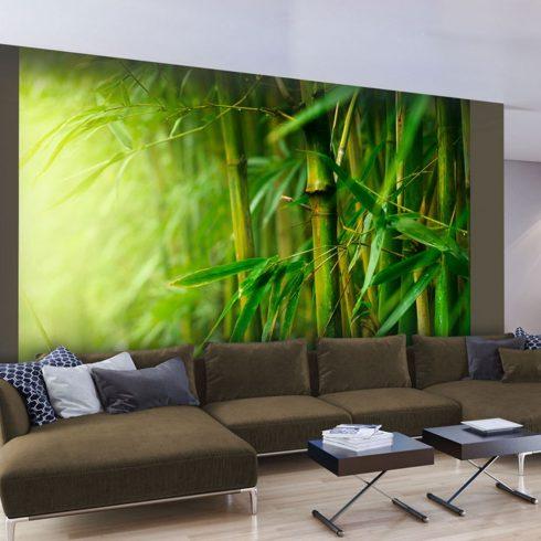 Fotótapéta - jungle - bamboo  -  ajandekpont.hu
