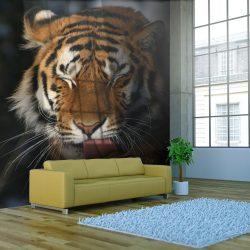 Fotótapéta - Szibériai tigris
