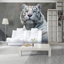 Fotótapéta - Bengáli tigris állatkertben