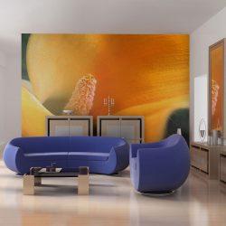 Fotótapéta - Yellow calla lily