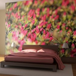 Fotótapéta - Bimbózó rózsa