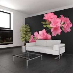 Fotótapéta - Azalea in Black