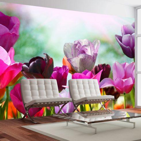 Fotótapéta - Gyönyörű tavaszi virágok, tulipán  -  ajandekpont.hu