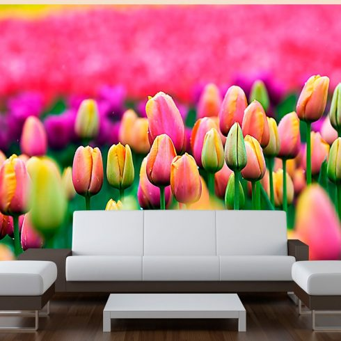 Fotótapéta - Field of tulipán  -  ajandekpont.hu