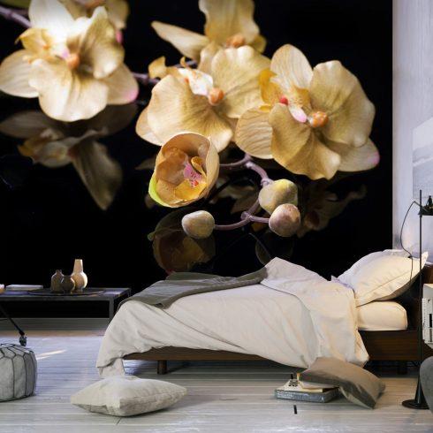 Fotótapéta - Orchids in ecru color  -  ajandekpont.hu