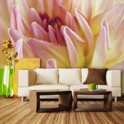 Fotótapéta - Pasztell színű dália virág harmat csepp