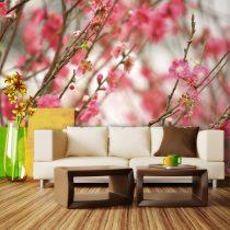 Fotótapéta - Blooming tree