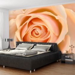 Fotótapéta - Peach-colored rose
