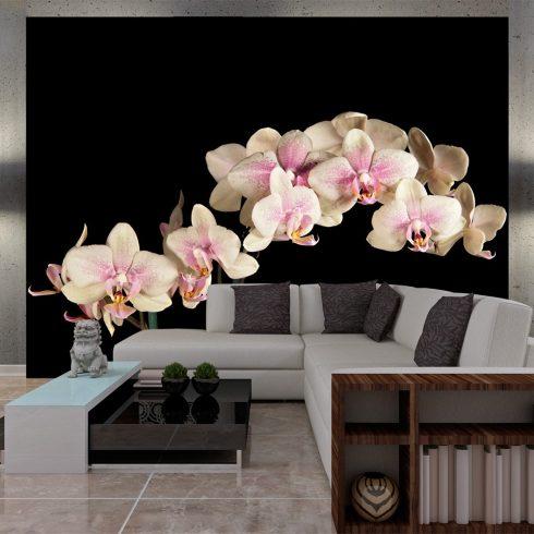 Fotótapéta - Virágzó orchidea l  -  ajandekpont.hu