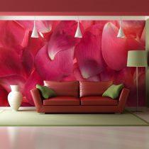 Fotótapéta - Rózsaszín rózsaszirom