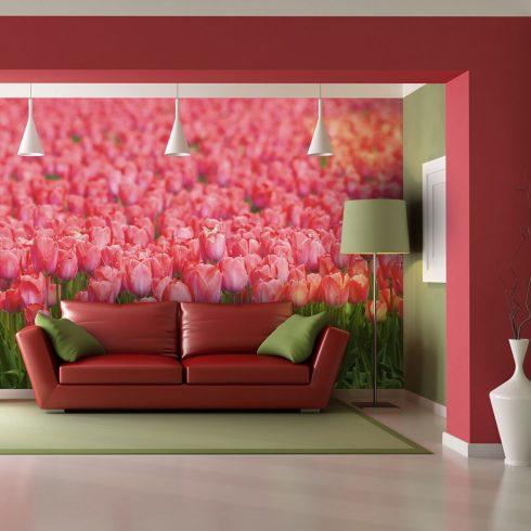 Fotótapéta - Tavaszi rét - friss rózsaszín tulipánok  -  ajandekpont.hu