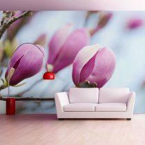 Fotótapéta - spring - magnolia