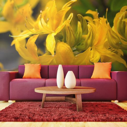 Fotótapéta - Close-up of yellow azalea  -  ajandekpont.hu