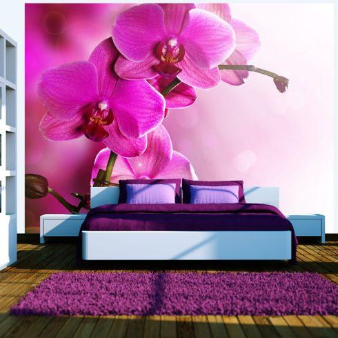 Fotótapéta - Rózsaszín orchidea  -  ajandekpont.hu