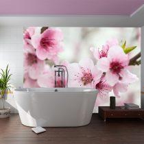 Fotótapéta - Spring, virágzó fa - rózsaszín virágok  -  ajandekpont.hu