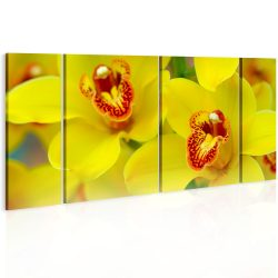 Vászonkép - Orchids - intensity of yellow color