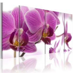 Vászonkép - Marvelous orchid