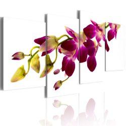Vászonkép - Orchid izzás