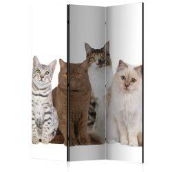 Paraván - Sweet Cats [Room Dividers]3 részes  135x172 cm
