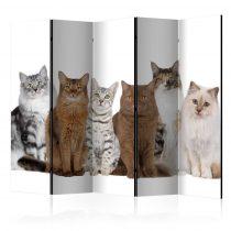 Paraván - Sweet Cats II [Room Dividers] 5 részes 225x172 cm