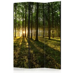 Paraván - Morning in the Forest [Room Dividers] 3 részes  135x172 cm