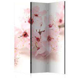 Paraván - Cherry Blossom [Room Dividers] 3 részes  135x172 cm