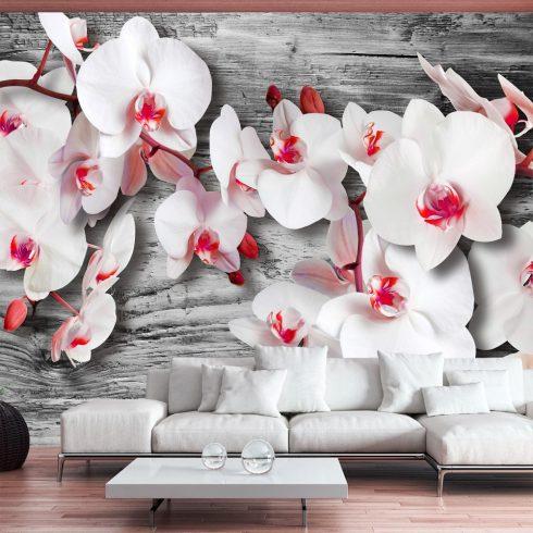 Fotótapéta  -  Callous orchids - ajandekpont.hu
