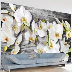 Fotótapéta - Callous orchids III